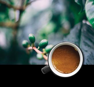 Fairtrade bonenkoffie - Ricolt Uthen