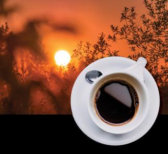 Fresh Brew koffie - Ricolt Uthen